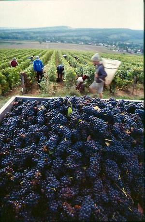 Les vins de Bigorre
